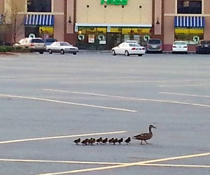 Why are they even IN the parking lot????