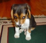 This little guy is a whole lot cuter in his shame than I am in mine.